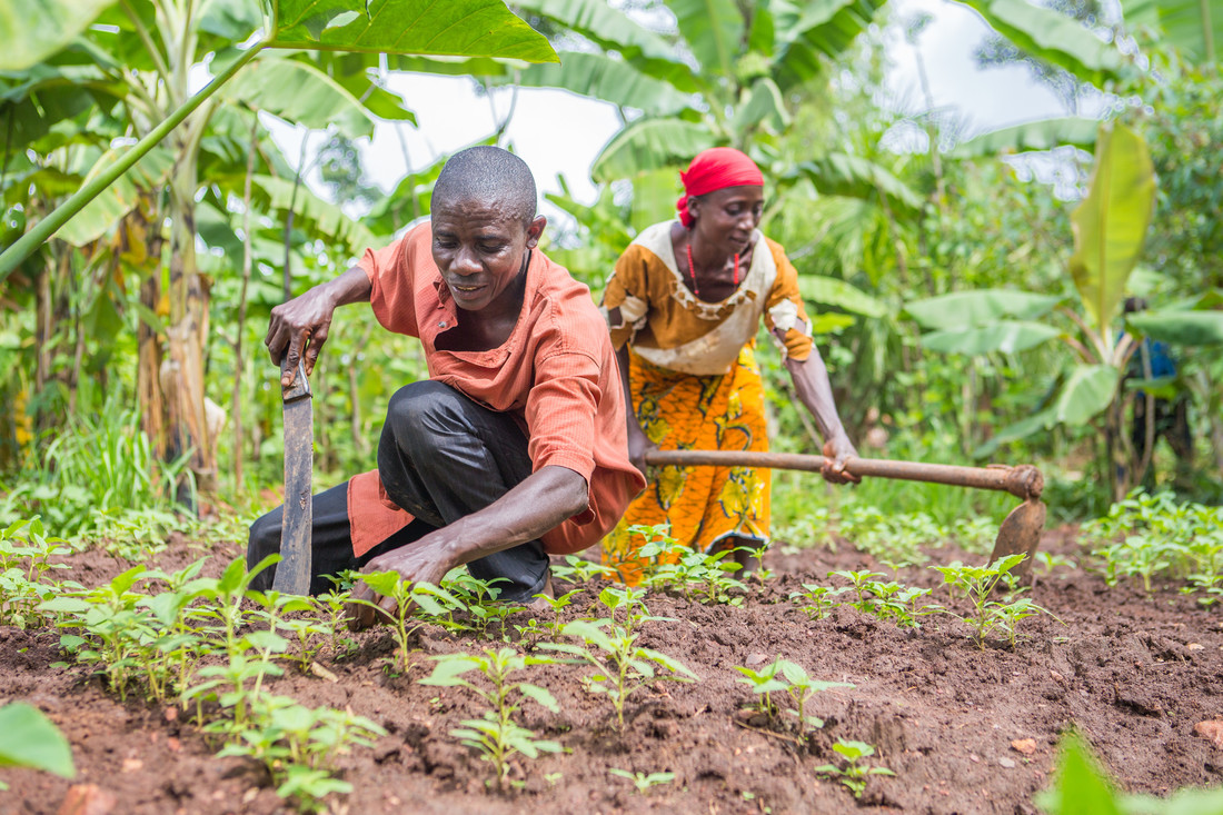 For Theophile and Calinie, the adoption of sustainable farming practices has resulted in a dramatic increase in yields (50 to 250 kilogrammes of beans) and incomes to ensure a better quality of life for their children. Photo: Lisa Murray/Oxfam