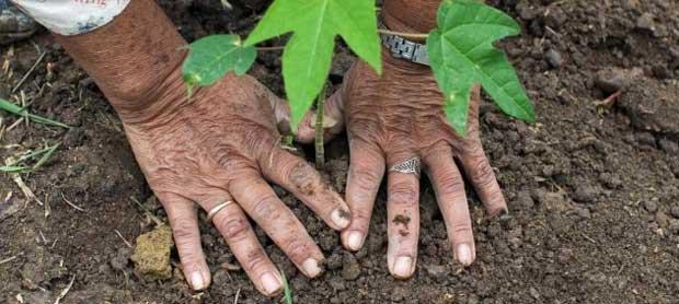 hands-planting-620_0.jpg