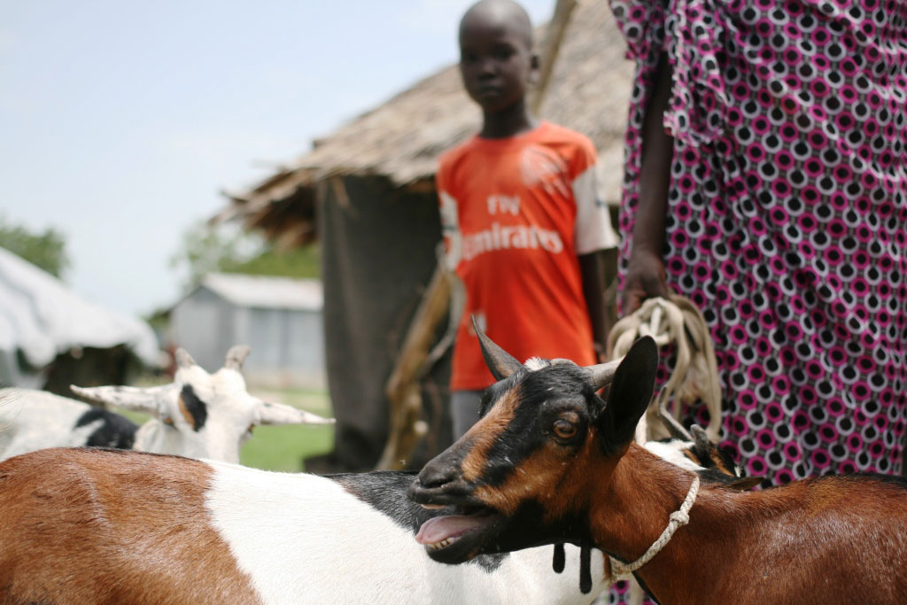 A boy stands with goats in South Sudan