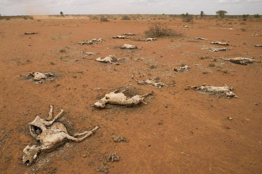 kenya_drought.jpg