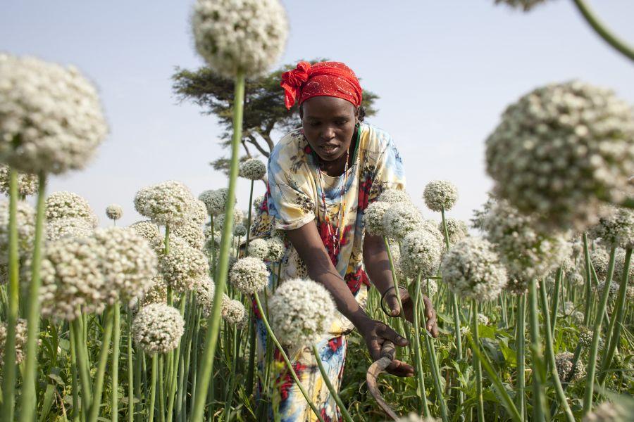 ogb_97511_kitabe_farming_ethiopia.jpg