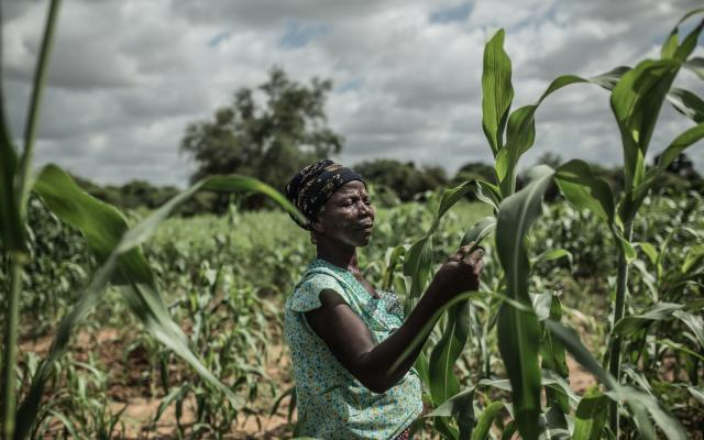 Noaga Oueda in her field of sorghum, in Burkina Faso.