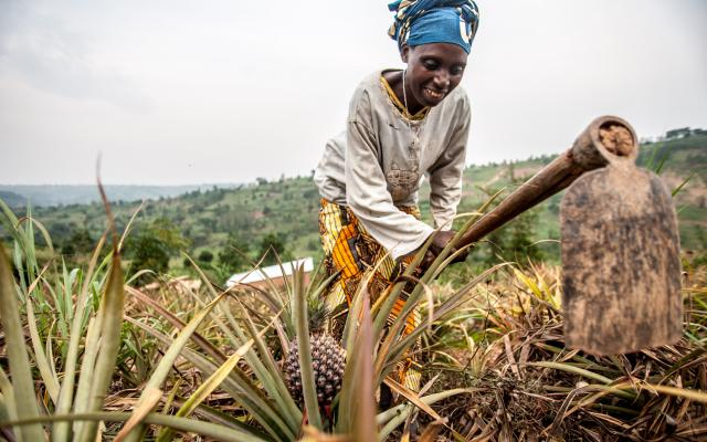 Valerie Mukangerero (53 yrs) works in her pinapple farm in Rwamurema village, Eastern Rwanda, Kirehe District.