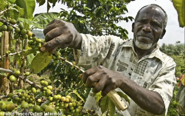 Man picking coffee beans in Uganda