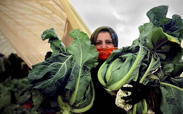 A Syrian refugee woman with a harvest of cauliflower, to be sold at the local market.