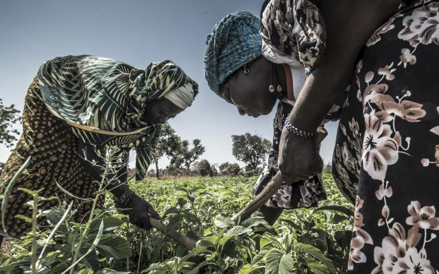Alizeta applies organic compost on her crops, with the help of another farmer.