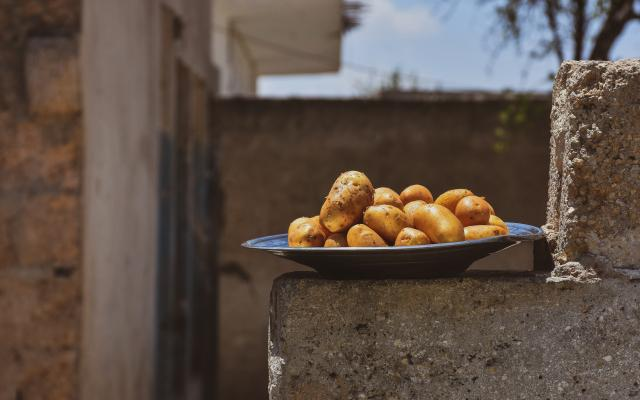 A plate of boiled potato – a regular meal that Syrian women make to offer to their children when they have not enough money to buy any other food items.