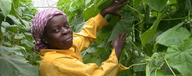 Mujer trabajando en el campo, Cuba. Crédito: Oxfam