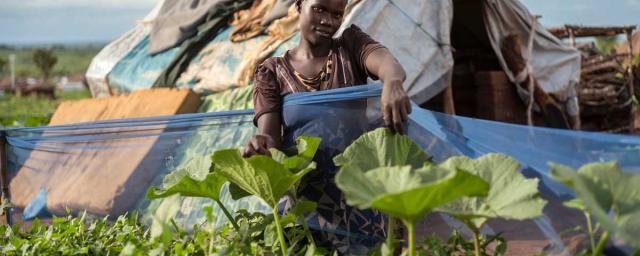 Bidibidi en el norte de Uganda, el asentamiento de refugiados más grande del mundo, hogar de más de 270,000 refugiados de Sudan del sur. Crédito: Kieran Doherty / Oxfam
