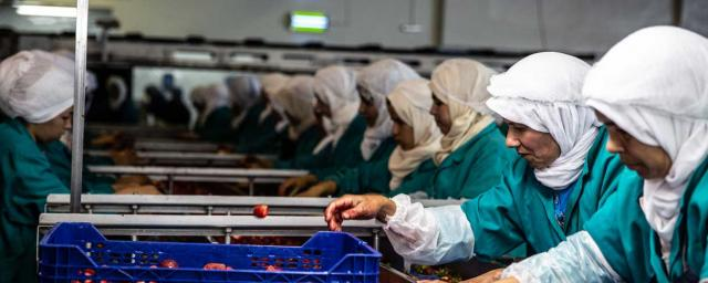 Messem has been involved in Oxfam Strawberry project since 2015 and is a member of the producer platform in Morocco. During peak season they employ over 2,000 people, of which over 90 per cent are women. Credit: Bekki Frost / Oxfam