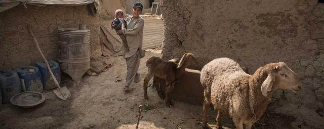 A boy carries a child inside a compound with different houses belonging to his extended family. The family came back to Kabul in 2003 after living in Iran during the Taliban time. In Iran they were farmers, here in Kabul some members of the family collect garbage for 1 to 2 dollars a day. Credit: Joël van Houdt/Oxfam Novib