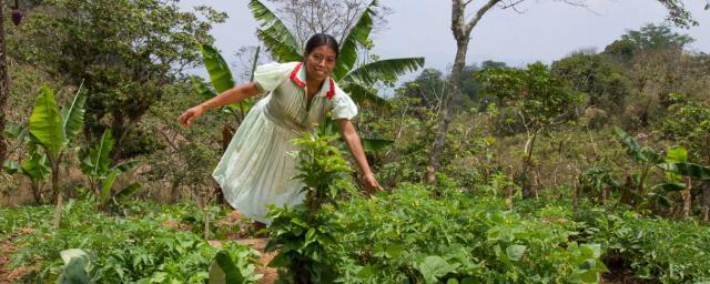 María Julia Pérez montre le potager qu'elle a planté avec l'aide d'Oxfam pour palier l'insécurité alimentaire provoquée par la sécheresse. Crédit : Coco McCabe / Oxfam America