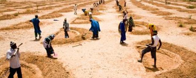 niger-cash-for-work-soil-71187-460_6.jpg