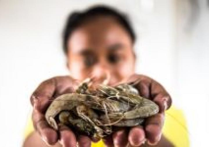 What are supermarkets doing to protect the people who produce our food? Photo: Adrian Mulya/TheSustainable Seafood Alliance Indonesia