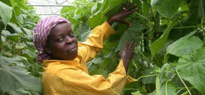 Woman working in the field, Cuba. Credit: Oxfam