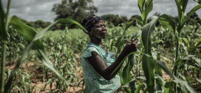 Noaga Oueda in her field of sorghum, Burkina Faso.