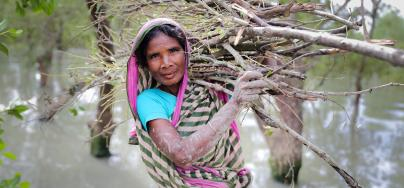 Nurjahan (45) collecting wood to sell for food after cyclone Bulbul. Gabura, Shamnagar