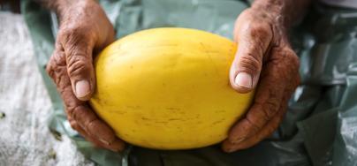 Hands showing fruit, Brazil. Photo: Tatiana Cardeal/Oxfam