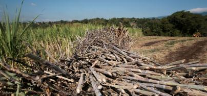 Large-scale sugar cane ethanol projects have resulted in serious environmental and social consequences for local populations in the Global South.