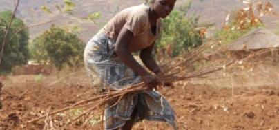 Los efectos de El Niño, unidos a los del cambio climático, pondrán a 60 millones de personas en riesgo de padecer hambre.