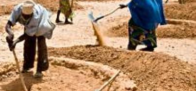 niger-cash-for-work-soil-71186-220_0_5.jpg