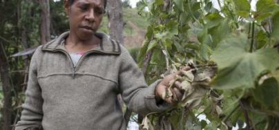 81734-oaus-apua-plant-papua-new-guinea-rodney-dekker-440x300.jpg