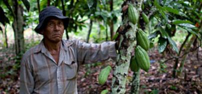 Manuel produce cacao en su parcela. Foto: Oxfam en Bolivia
