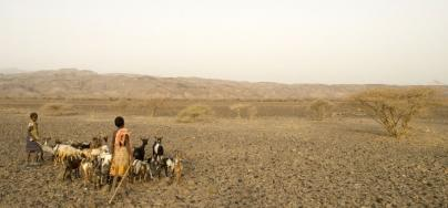 Herdsmen with goats, during a drought in Okarey-af, Afar region, Ethiopia. Photo: Nick Danziger
