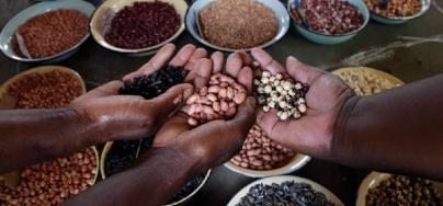 Hands full of diverse seeds. Photo: Shepherd Tozvireva/Oxfam