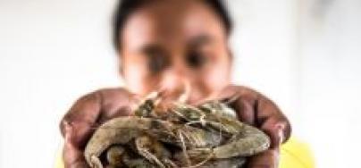 ¿Qué están haciendo los supermercados para proteger a las personas que producen nuestros alimentos? Foto: Adrian Mulya / The Sustainable Seafood Alliance Indonesia