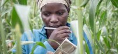 A woman in Tsholotsho District in Zimbabwe is participating in a pilot project to develop drought-resistant crops and learn simple methods to effectively grow produce (2016). Photo: Sven Torfinn/Oxfam Novib.