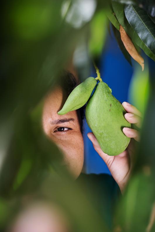 Maria, fruit worker, under mango tree