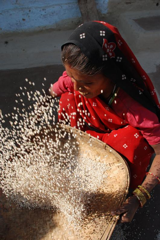 ogb_27653_india_agriculture_woman.jpg