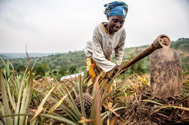 Valerie Mukangerero (53 yrs) works in her pinapple farm in Rwamurema village, Eastern Rwanda, Kirehe District.